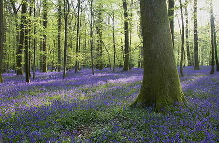 The bluebell woods at nearby Soudley are a magnificent sight in early May.